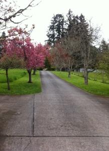 Driveway off Mt. Newton Cross Rd.
